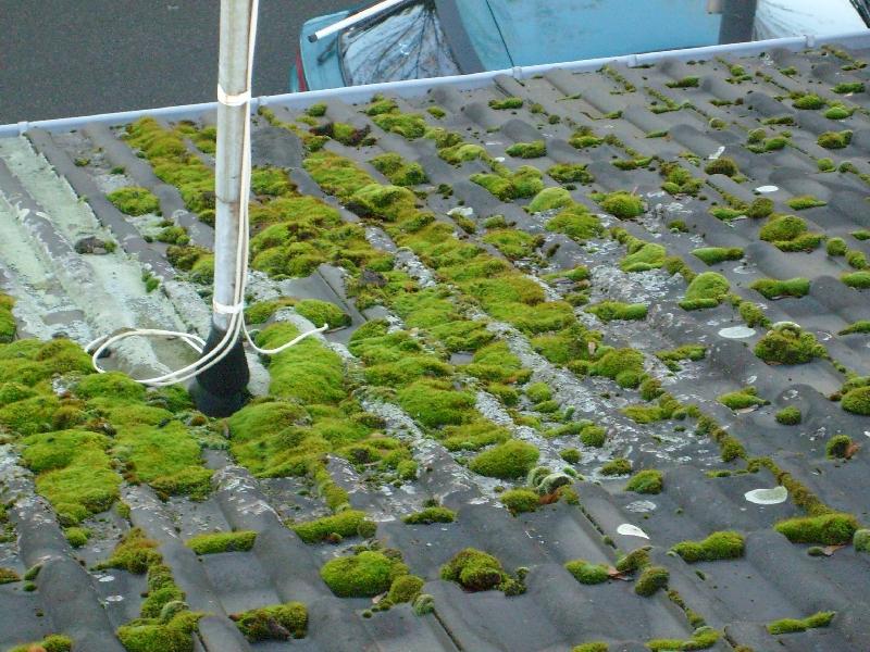 Bevorzugt Moosentfernung - damit Ihr Dach gut erhalten bleibt OF43