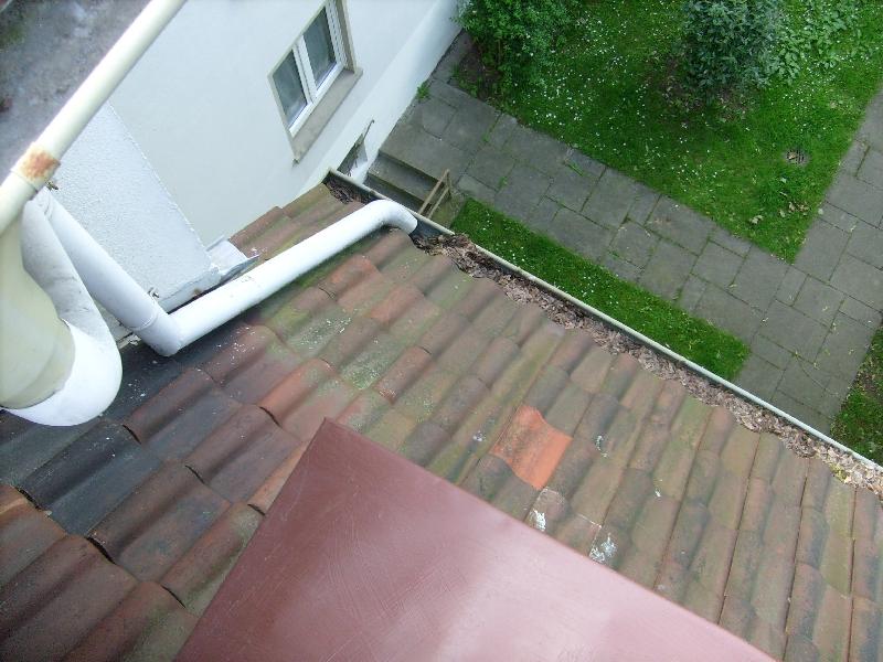 Dach & Dachrinnenreinigung